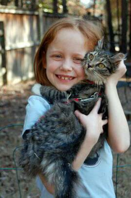 American Bobtail kittens get along with kids